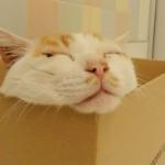 猫の尿路結石(尿道結石)とは?