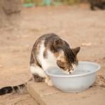 猫が冬に水を飲まなくなる原因は?尿路結石の予防に水分補給は超重要